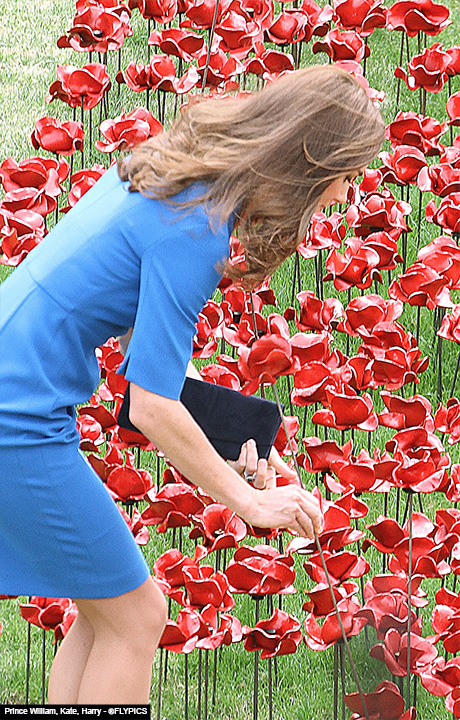 royals_Poppy_five